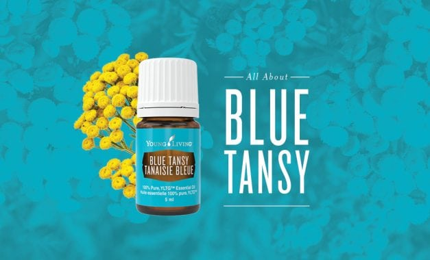 All About Blue Tansy